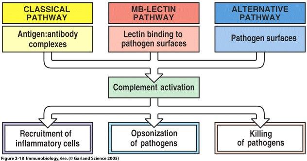 Correlazione MBL (Mannose Binding Lectine) - Vulvodinia • VULVODINIA.INFO Figure2_18