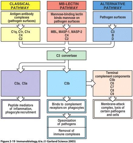 Correlazione MBL (Mannose Binding Lectine) - Vulvodinia • VULVODINIA.INFO Figure2_19